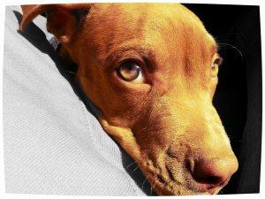 Apollo renne and joselito dog